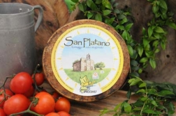 latin's gusto grossiste rungis paris fromage italie brebis SAN PALTANO